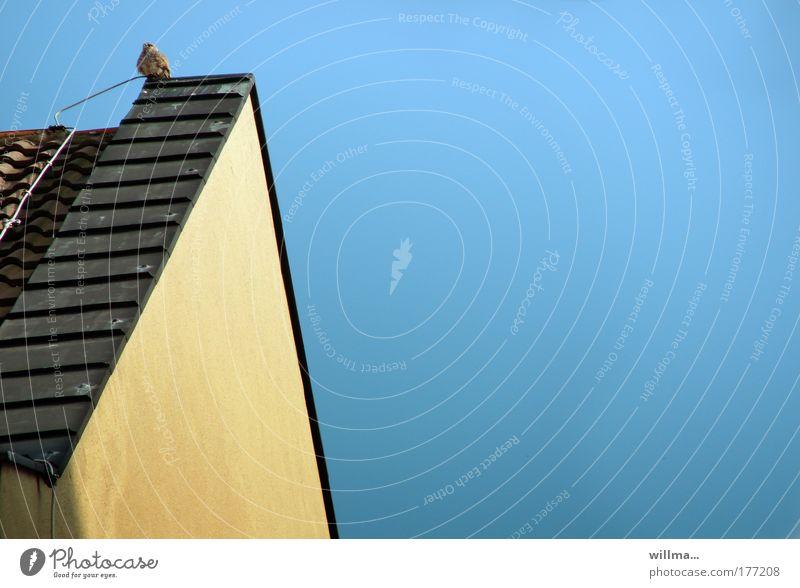 hülfä! Himmel Einsamkeit Gebäude Tierjunges Vogel Angst fliegen Dach Aussicht Mut himmelblau Rathaus Dachgiebel Falken Turmfalke