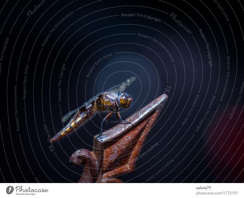 Spitzenplatz Tier ruhig Umwelt oben Design Zufriedenheit Wildtier ästhetisch Aussicht genießen Flügel Spitze beobachten Gelassenheit Insekt Sonnenbad