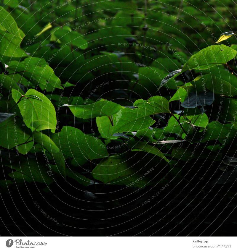 dickicht Farbfoto Detailaufnahme Tag Schatten Kontrast Silhouette Umwelt Natur Tier Luft Frühling Sommer Klima Klimawandel Pflanze Baum Sträucher Blatt