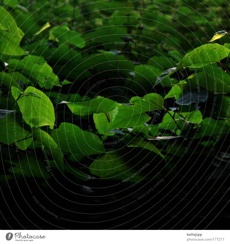 dickicht Natur grün Baum Pflanze Sommer Tier Blatt Umwelt Frühling Luft Park Klima Wachstum Sträucher ökologisch Umweltschutz