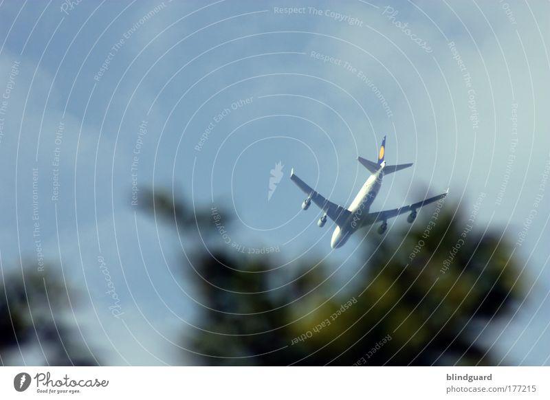 Mama, I'm Coming Home Baum Sonne Sommer Ferien & Urlaub & Reisen Blatt Ferne Metall Flugzeug fliegen Ausflug Luftverkehr Güterverkehr & Logistik