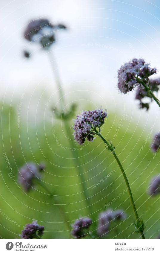 Namenlose Blume Farbfoto mehrfarbig Außenaufnahme Nahaufnahme Detailaufnahme Menschenleer Textfreiraum oben Morgen Tag Schwache Tiefenschärfe Zufriedenheit