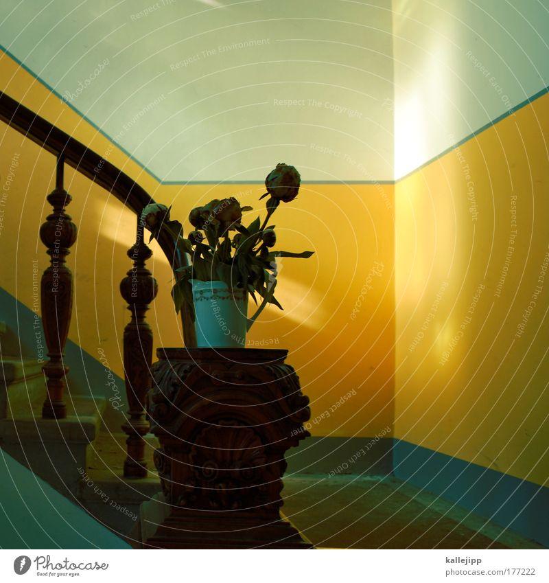 herrenlose blume schön Blume Haus gelb Holz Wohnung Treppe Ecke Dekoration & Verzierung Häusliches Leben Innenarchitektur Etage Geländer Treppenhaus Haushalt