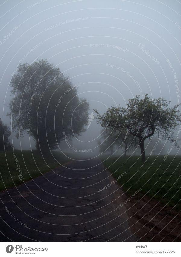 vernebelt Farbfoto Gedeckte Farben Außenaufnahme Menschenleer Morgen Morgendämmerung Silhouette Unschärfe Landschaft Nebel Baum Feld Straße Wege & Pfade dunkel