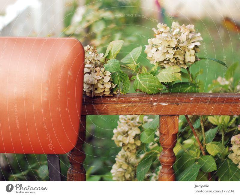 Auf Omas Terrasse Natur alt grün Pflanze Blume ruhig Erholung Garten Glück Wärme Stimmung Zufriedenheit Zeit natürlich Sicherheit Häusliches Leben