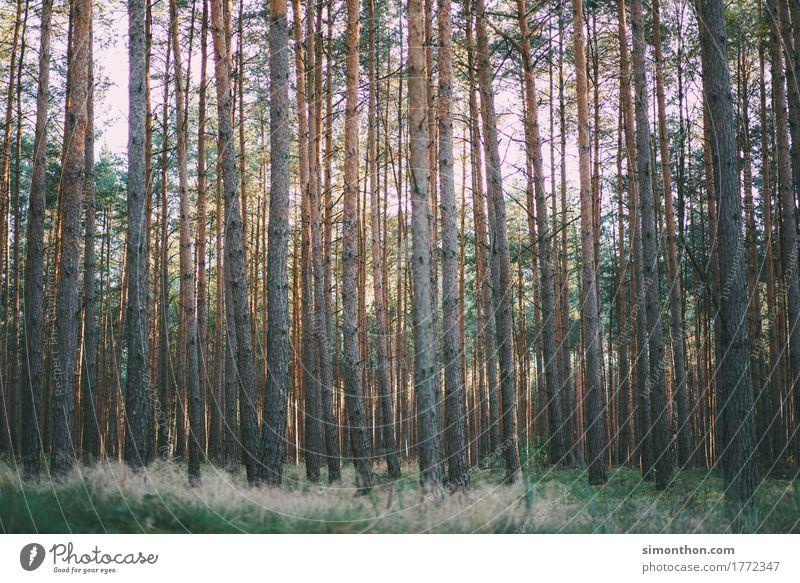 Wald Umwelt Natur Landschaft Pflanze Erde Duft Einsamkeit Erholung erleben Ferien & Urlaub & Reisen Freiheit Frieden Zufriedenheit Hoffnung Horizont Idylle