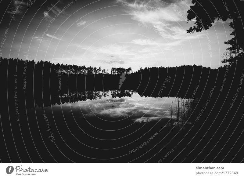Natur Himmel Natur Ferien & Urlaub & Reisen Pflanze Wasser Landschaft Wolken Tier Ferne Wald Umwelt Küste Zeit Erde See Stimmung