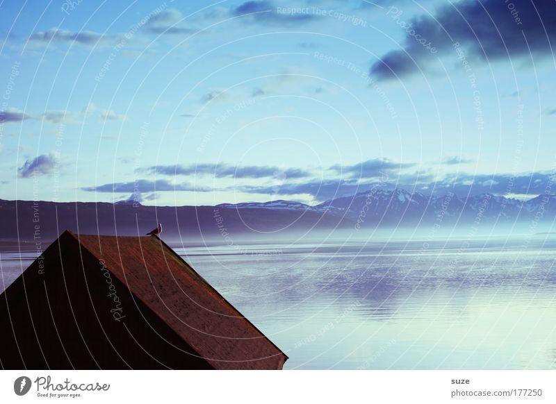 Möwe auf´m Dach Himmel Natur blau Wasser Ferien & Urlaub & Reisen schön Sommer Wolken Landschaft Haus Umwelt Berge u. Gebirge kalt Küste Freiheit Horizont