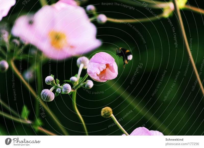 Landeplatz Natur Blume Pflanze Sommer ruhig Tier Wiese Blüte Landschaft Umwelt fliegen ästhetisch Flügel natürlich Idylle