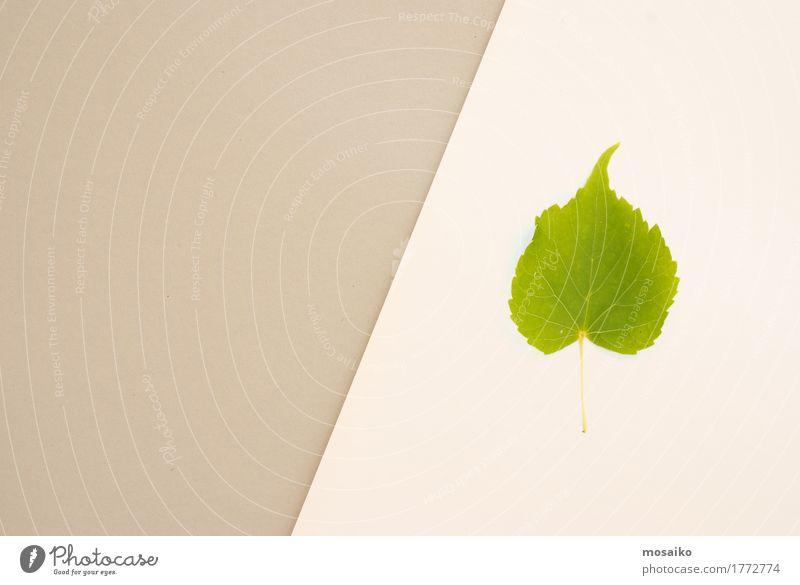 Herbarium Natur Pflanze - ein lizenzfreies Stock Foto von Photocase