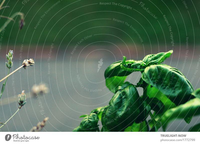 Trend-Kraut Pflanze grün Blatt Freude Blüte natürlich Gesundheit Lebensmittel grau Ernährung frisch genießen Kultur Energie Lebensfreude einfach