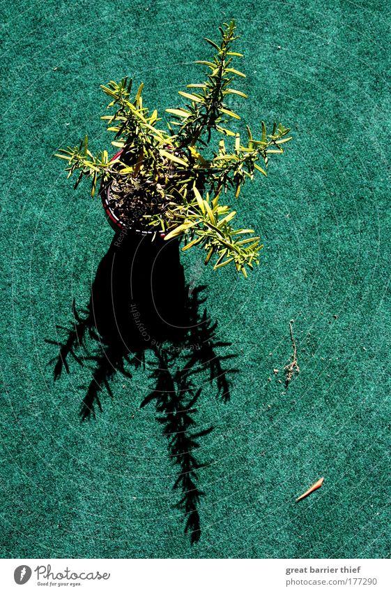 Rorschachtest grün Pflanze Sommer Einsamkeit Zufriedenheit Umwelt Perspektive Duft Schönes Wetter Vase Grünpflanze Inspiration Topfpflanze Kunstrasen