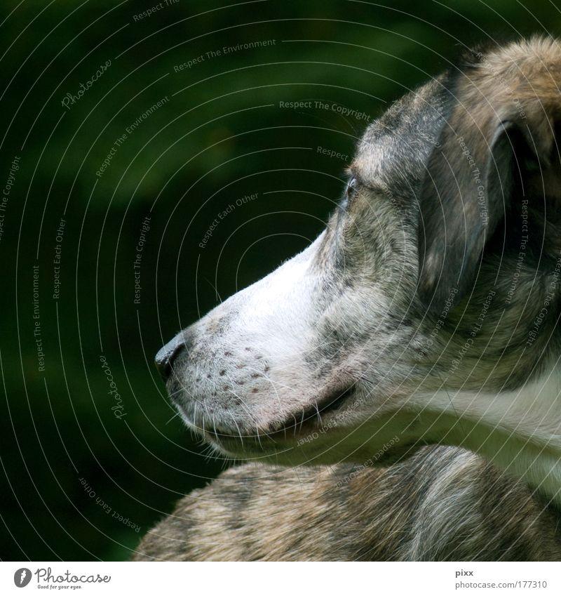 Carlos Farbfoto Außenaufnahme Nahaufnahme Textfreiraum links Textfreiraum oben Wegsehen harmonisch ruhig Umwelt Natur Grünpflanze Tier Haustier Hund Tiergesicht