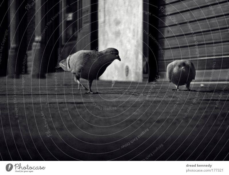 Vogelperspektive Stadt Haus Tier Stein frei Erde Perspektive Kommunizieren nah Sauberkeit beobachten Neugier Fressen Taube Umweltschutz