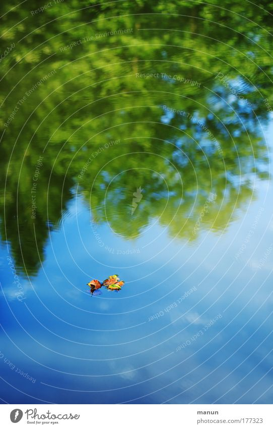Spätsommer Natur Wasser Himmel Baum Sommer ruhig Blatt Wolken Wald Erholung Herbst Traurigkeit See Park Zufriedenheit Umwelt