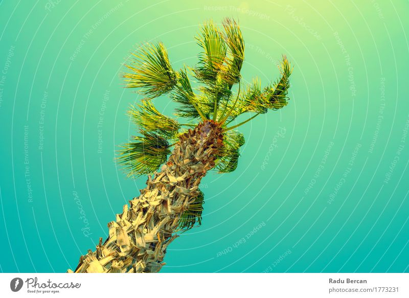 Grüne Palme auf klarem blauem Himmel Natur Ferien & Urlaub & Reisen Pflanze Farbe Sommer grün Sonne Baum Landschaft Strand Umwelt gelb natürlich Idylle