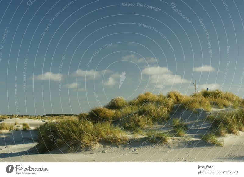 Dünen, Gras, Himmel und Wolken Farbfoto Außenaufnahme Menschenleer Tag Sonnenlicht Starke Tiefenschärfe Totale Landschaft Pflanze Sand Wetter Hügel Strand Insel