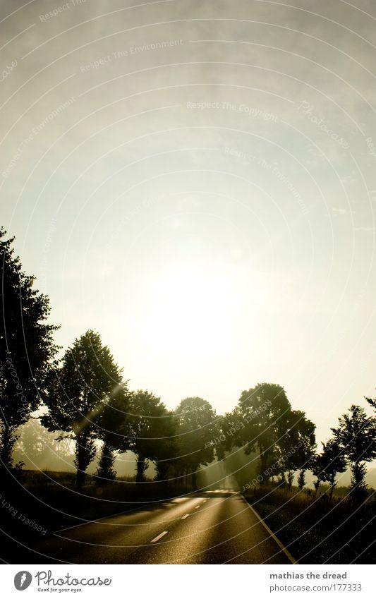 IMMER DER SONNE ENTGEGEN Farbfoto Gedeckte Farben Außenaufnahme Menschenleer Morgen Morgendämmerung Tag Licht Schatten Kontrast Silhouette