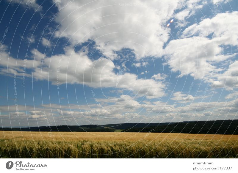 Kornfeld im Schwarzwald Natur Himmel Sonne blau Pflanze Sommer Wolken Ferne Gras Berge u. Gebirge Frühling Wärme Landschaft Luft Kraft Feld