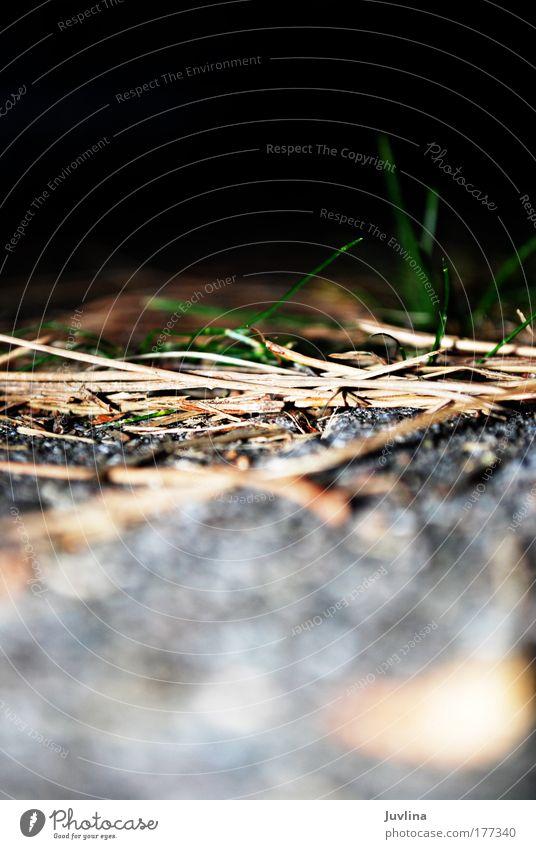 Unschärfe/Schärfe Natur grün Pflanze Sommer Blatt Tier Wiese Gras Stein Wärme Landschaft Zufriedenheit Umwelt Beton Erde Wachstum