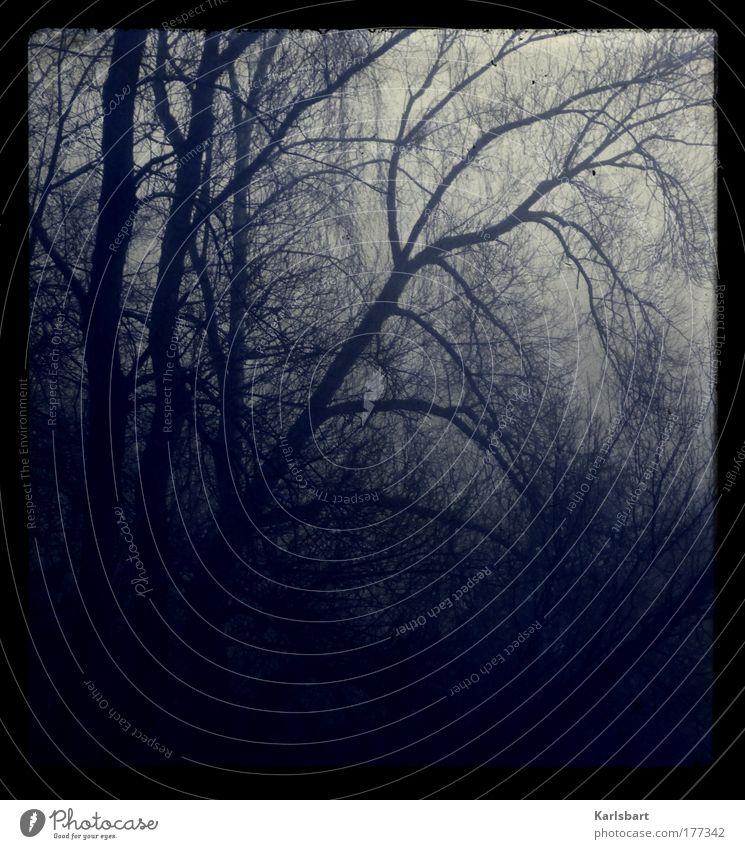 blue. haze. Natur Baum Winter Einsamkeit Wald dunkel kalt Tod Traurigkeit Landschaft Nebel Umwelt verrückt Trauer bedrohlich Ast
