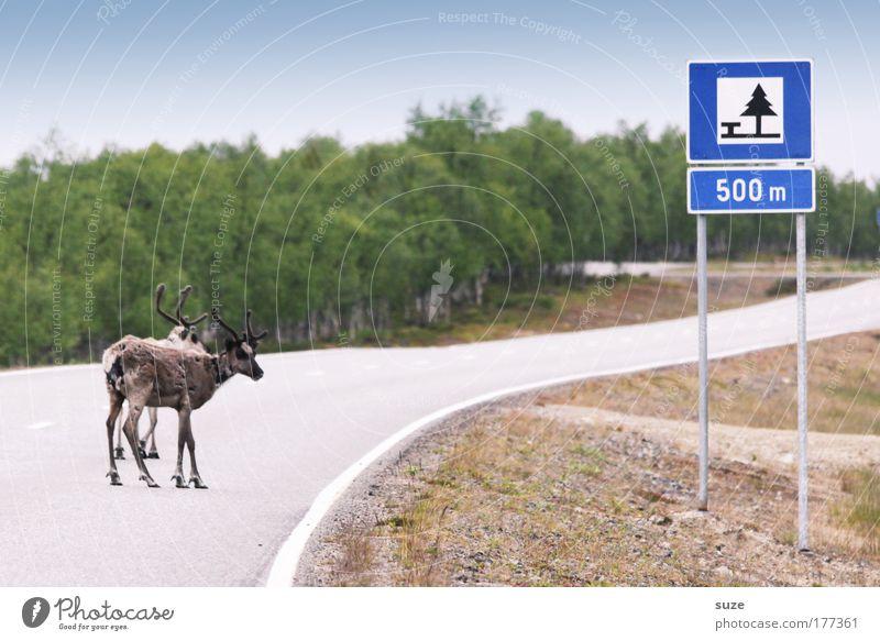 Ohne Rast und Ruh Natur Baum Pflanze Tier Straße Landschaft Wege & Pfade Umwelt warten Schilder & Markierungen laufen Abenteuer Pause stehen Wildtier Kurve