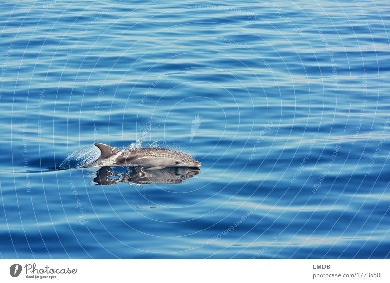 Delphin... Stop Motion 2 Umwelt Natur Wellen Meer Tier Wildtier Delphine 1 Schwimmen & Baden tauchen elegant frei blau Freude Fröhlichkeit Lebensfreude