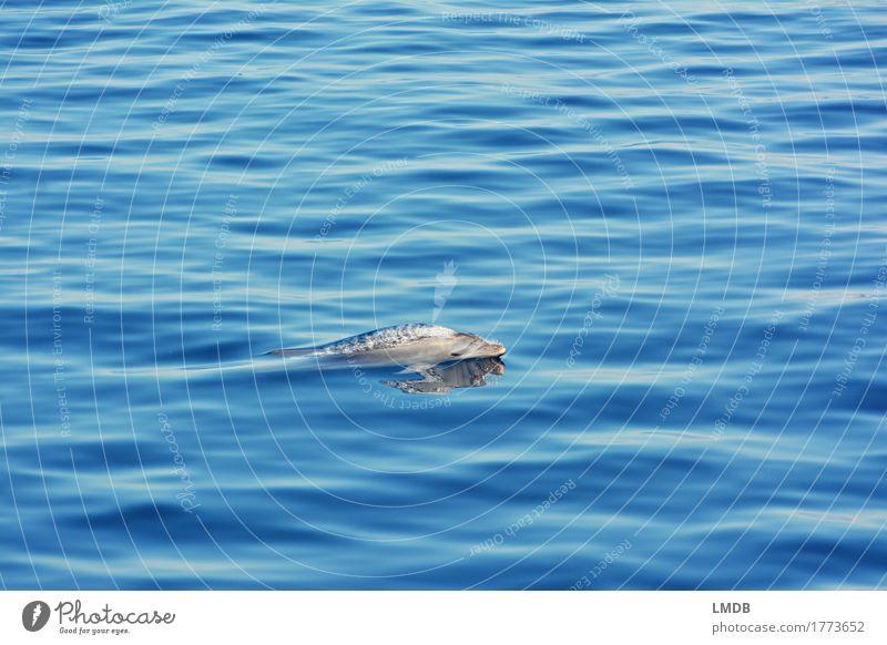 Delphin... Stop Motion 1 Umwelt Natur Wellen Meer Tier Wildtier Delphine Schwimmen & Baden tauchen elegant frei blau Freude Fröhlichkeit Lebensfreude ästhetisch