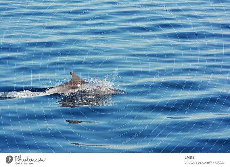 Delphin... Stop Motion 4 Umwelt Natur Wellen Meer Tier Wildtier Delphine 1 Schwimmen & Baden tauchen elegant frei blau Freude Fröhlichkeit Lebensfreude