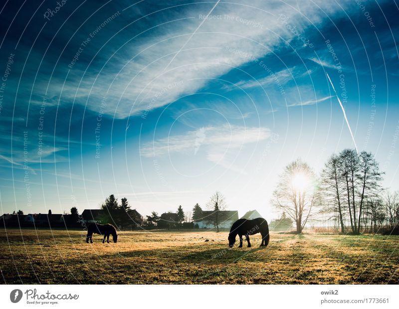Endlich wieder Montag Umwelt Natur Landschaft Pflanze Tier Himmel Wolken Horizont Frühling Klima Schönes Wetter Baum Gras Wiese Weide Dorf Haus Pferd 2 Fressen