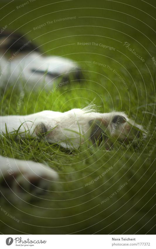 Lazy Natur schön grün ruhig Einsamkeit Tier Leben Erholung Gras träumen Hund Zufriedenheit Stimmung schlafen Perspektive Sicherheit