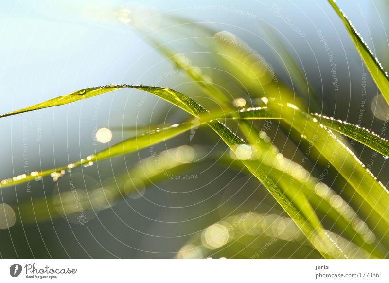 wenn der wind weht Farbfoto Außenaufnahme Nahaufnahme Detailaufnahme Menschenleer Tag Licht Reflexion & Spiegelung Sonnenlicht Schwache Tiefenschärfe