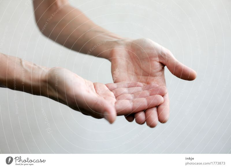 es liegt doch auf der Hand Erwachsene Leben 1 Mensch Kommunizieren gestikulieren Vor hellem Hintergrund Handfläche anschaulich zeigen berühren bedeuten