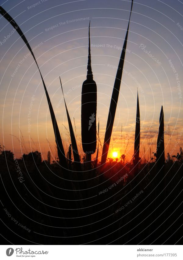 Zigarre am Morgen Farbfoto Außenaufnahme Menschenleer Morgendämmerung Sonnenaufgang Sonnenuntergang Zentralperspektive Natur Landschaft Sonnenlicht Pflanze Gras