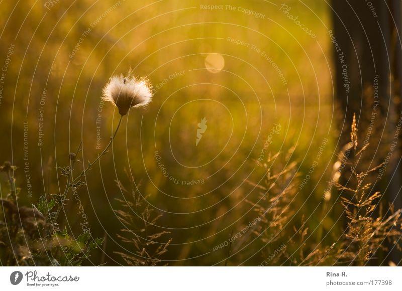 Mondsüchtig Natur Pflanze Sommer Tier gelb Gefühle Gras Glück Wärme Landschaft Stimmung gold Insekt Sehnsucht leuchten Schönes Wetter