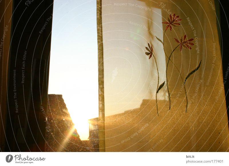 HAUSFLURBEPFLANZUNG harmonisch Wohlgefühl Erholung ruhig Häusliches Leben Wohnung Haus Raum Umwelt Luft Sonne Sonnenaufgang Sonnenuntergang Sonnenlicht Sommer