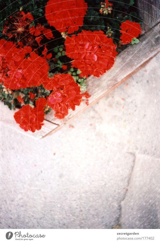 [KI09.1] die hängenden gärten von kiel. Natur rot Pflanze Sommer Blume Farbe Holz grau Beton frisch leuchten Dekoration & Verzierung heiß Garten Blühend Duft