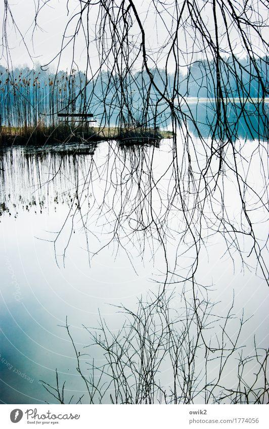 Verhangen Umwelt Natur Landschaft Pflanze Wasser Himmel Horizont Baum Wildpflanze Zweig Teich See hängen dünn authentisch hell viele ruhig Sehnsucht Fernweh