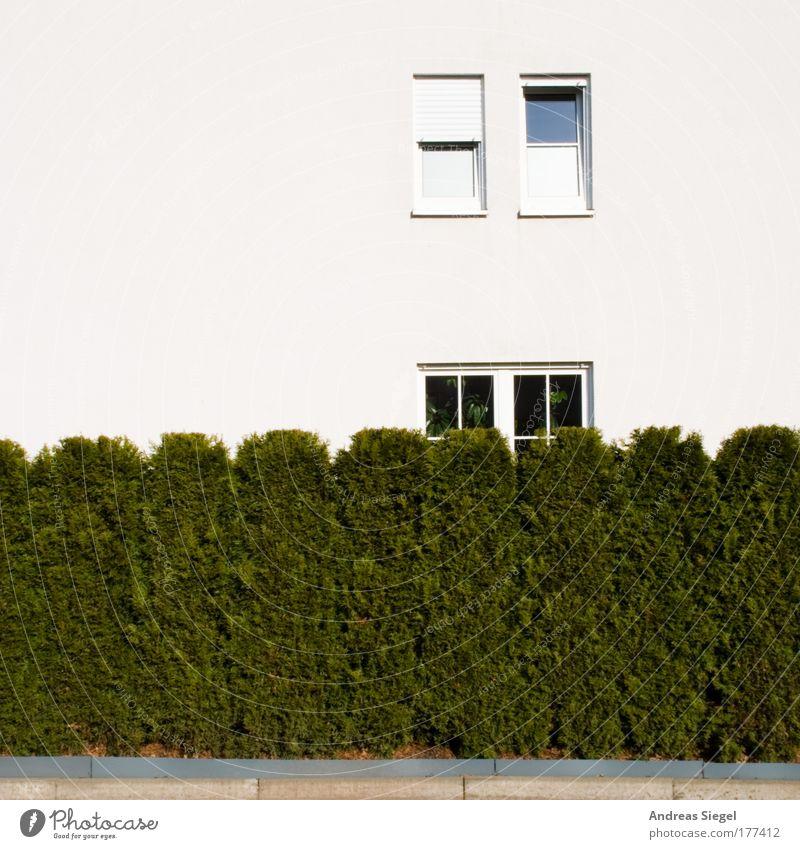 Heckenfenster weiß grün Haus Wand Fenster Garten Mauer Gebäude hell Architektur Wohnung Design Umwelt Fassade Lifestyle