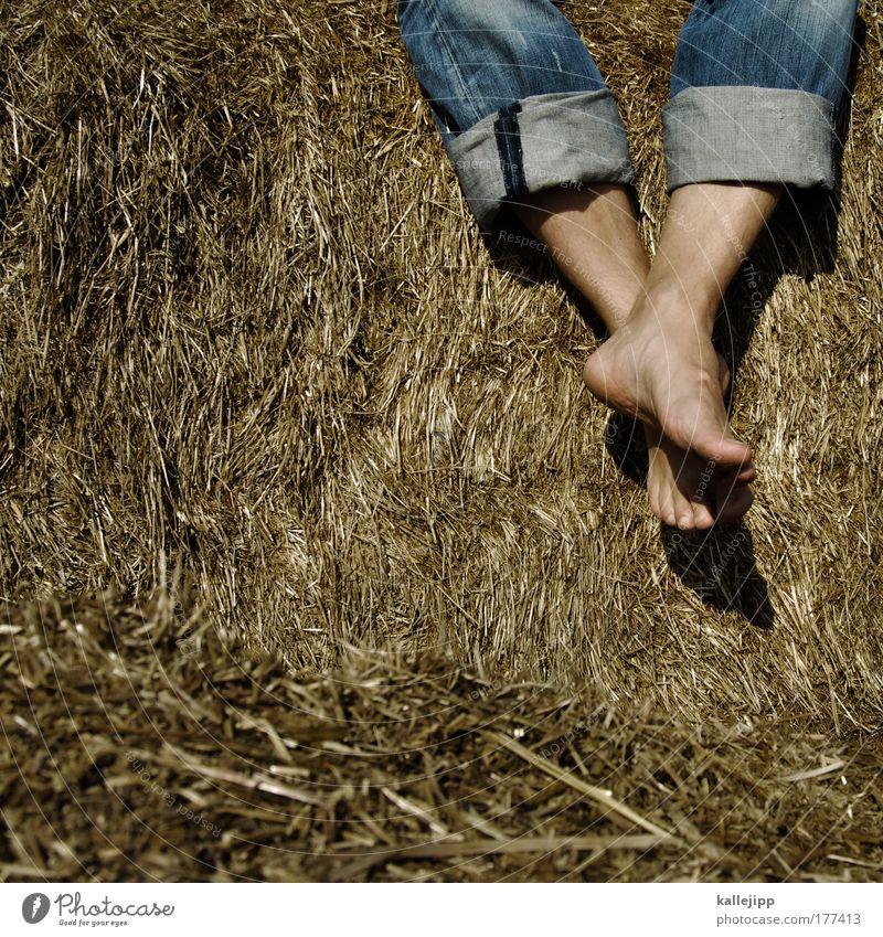 geld wie heu Mensch Sommer ruhig Freude Beine Fuß Freizeit & Hobby maskulin Zufriedenheit Lifestyle sitzen Erfolg Heu Wohlgefühl Sommerurlaub harmonisch