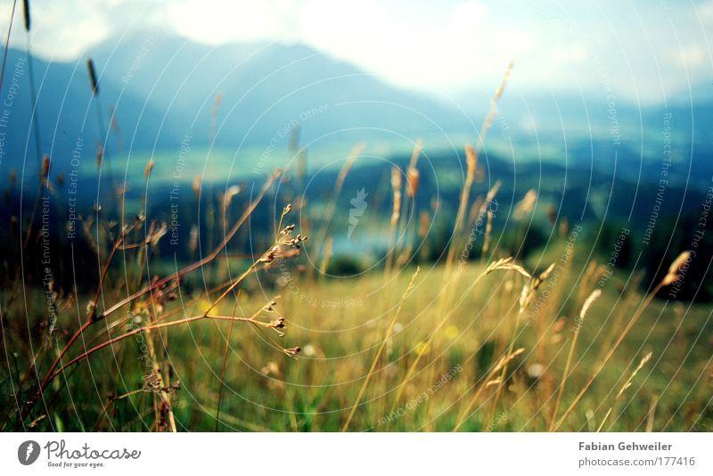 mountain meadow Natur Pflanze Sommer Ferne Erholung Wiese Berge u. Gebirge Landschaft Gras Wärme Zufriedenheit Kraft elegant Ausflug Tourismus Fröhlichkeit