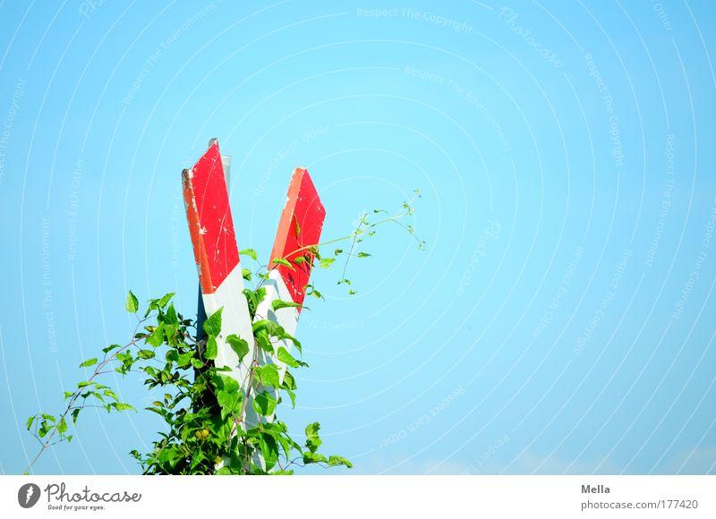 Stillgelegt blau Pflanze Sommer ruhig Blatt Schilder & Markierungen Wachstum Ende Vergänglichkeit Idylle Verfall Hinweisschild Kontrolle Vorsicht stagnierend