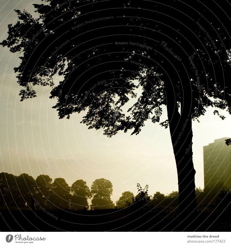 GOTEN MORGEN PLATTENBAU Himmel Natur schön Baum Sommer Wolken Wald Umwelt Wiese Landschaft Wärme Gebäude Luft Stimmung Park Horizont