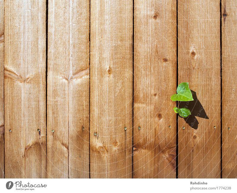 Durchbruch Pflanze Sommer grün Blatt gelb Wand Holz Mauer Freiheit braun Linie Kraft einzigartig Unendlichkeit Holzbrett Optimismus