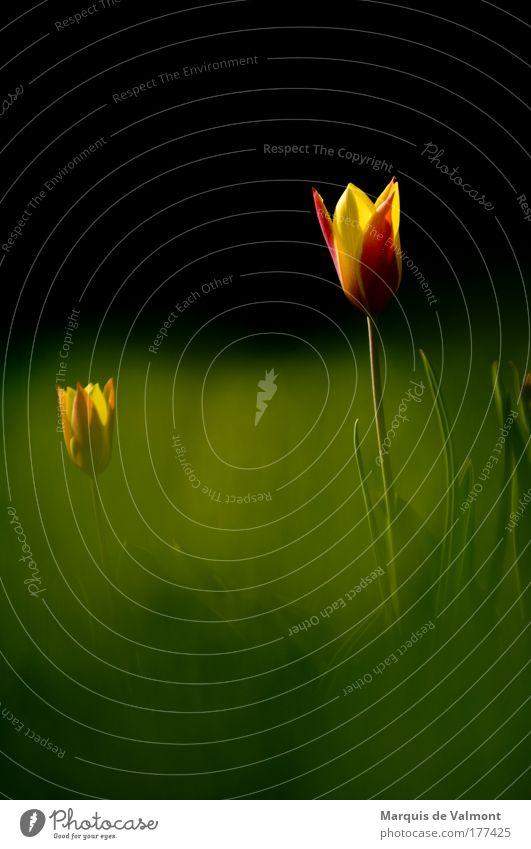 deep inside Farbfoto mehrfarbig Außenaufnahme Nahaufnahme Menschenleer Hintergrund neutral Morgen Sonnenlicht Schwache Tiefenschärfe Zentralperspektive Pflanze