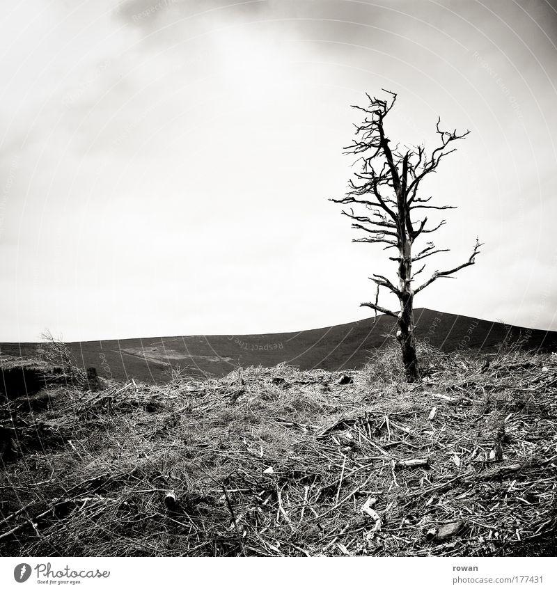 überlebender Baum Pflanze Einsamkeit dunkel kalt Tod Berge u. Gebirge Holz Traurigkeit Landschaft Felsen Feuer Trauer Sträucher bedrohlich Wandel & Veränderung