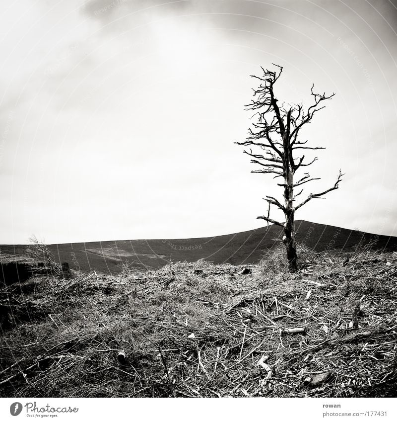 überlebender Schwarzweißfoto Außenaufnahme Tag Landschaft Pflanze Baum Sträucher Felsen Berge u. Gebirge bedrohlich dunkel gruselig kalt trocken Schmerz