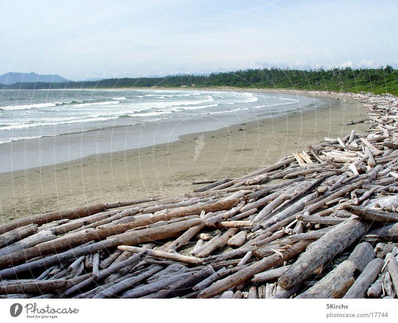 Long Beach Meer Strand Holz Kanada Vancouver Island Treibholz