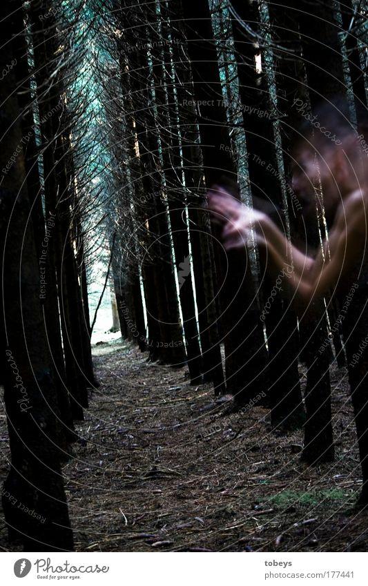 Panik Wald Urwald gruselig Überraschung träumen Tod Angst Todesangst gefährlich Verzweiflung Unglaube verstört Schüchternheit Ekel Feindseligkeit Rache