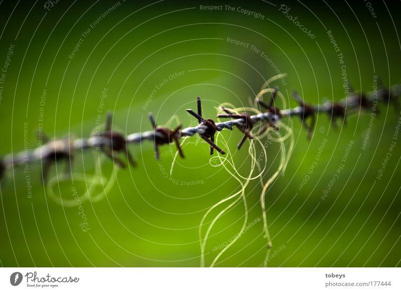 Gescheitert grün Haare & Frisuren Freiheit Angst wild ästhetisch Sicherheit bedrohlich Landwirtschaft Unendlichkeit Zaun Grenze Gewalt Platzangst Draht gefangen